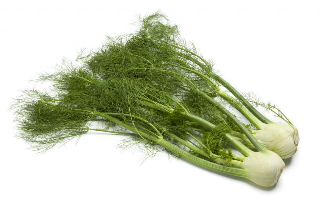 Image result for Fennel