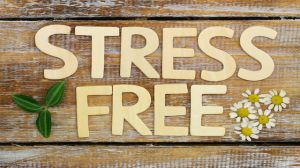 Stress free written with wooden letters on rustic wood