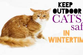 Cat snowy winter