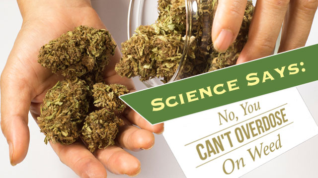 sciencesaysyoucantoverdoseonweed_640x359