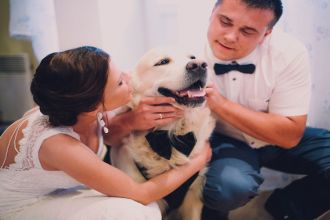 groom and bride playing with their dog labrador at home.