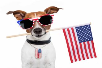 american dog with usa flag and shades