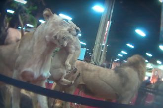undercover-footage-of-trophy-hunting-convention