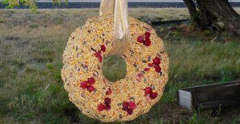 Birdseed Wreath Feature Photo