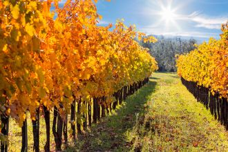 Fall Trips Mendocino Vineyard