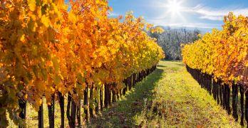 Fall Trips Mendocino Vineyard