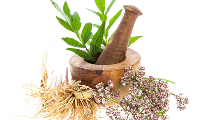 Valerian Root For Insomnia
