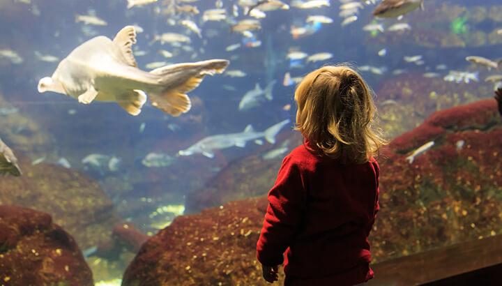 10 000 Animals Left Behind In Ripley S Aquarium Near Fire