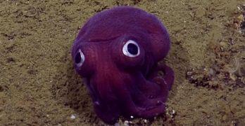 Purple Sea Creatures