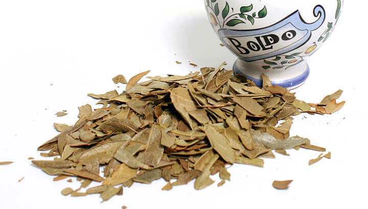 Boldo tea has many health benefits