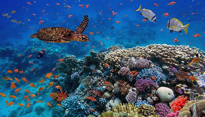 Environmental Concerns include marine health
