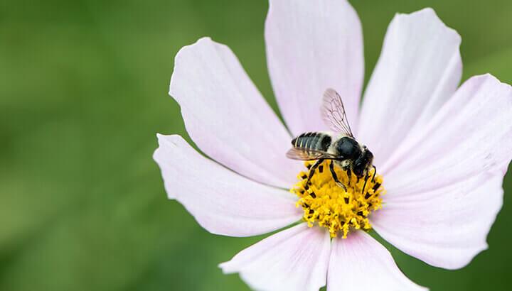 Environmental Concerns include pollinators