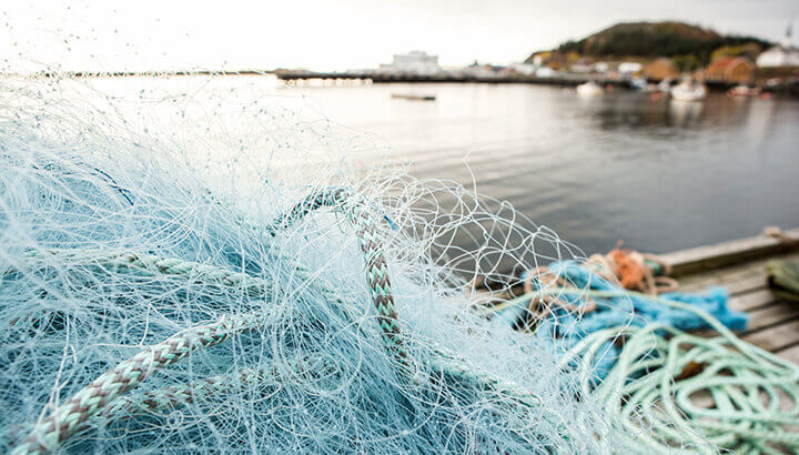 Fishing nets catch vaquitas