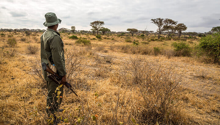 Park rangers help protect rhinos from poachers