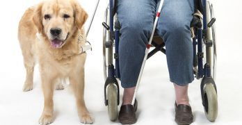 Service animals fly for free