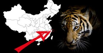 Tiger mauls zoo attendee in China