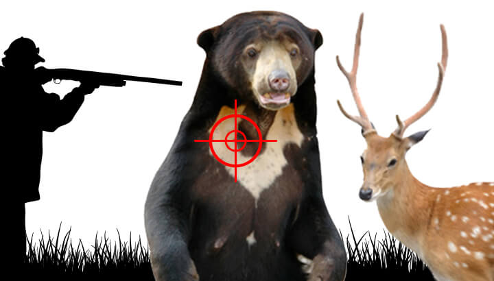 nt_killbearsavedeer_FeaturedImage720x410 (1)