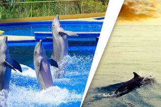 Awesome reasons to save dolphins