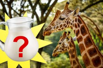 Is giraffe milk the next superfood