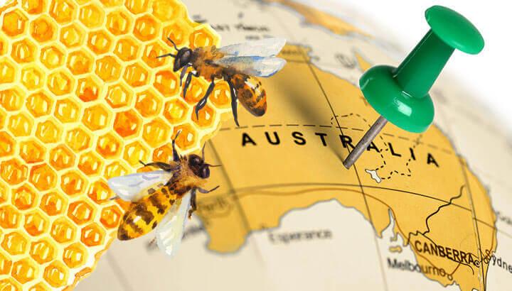 Manuka honey relative found in Australia