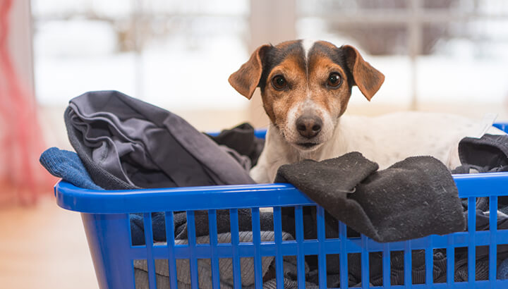 Laundry pods may be harmful to pets if swallowed.