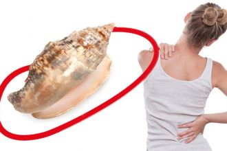 Seasnails may one day be used as natural painkillers