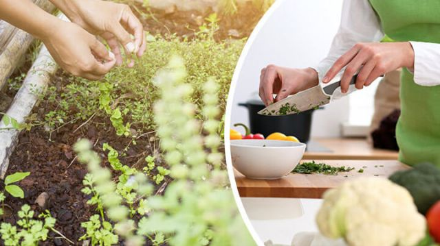 Grow Your Own Medicinal Herb Garden